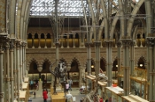 oxfordnhmuseumof-natural-history