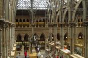 oxfordnhmuseumof-natural-history